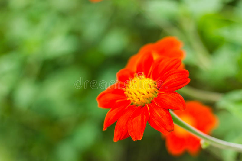 Download Fleur orange en nature image stock. Image du vert, floral - 45368333