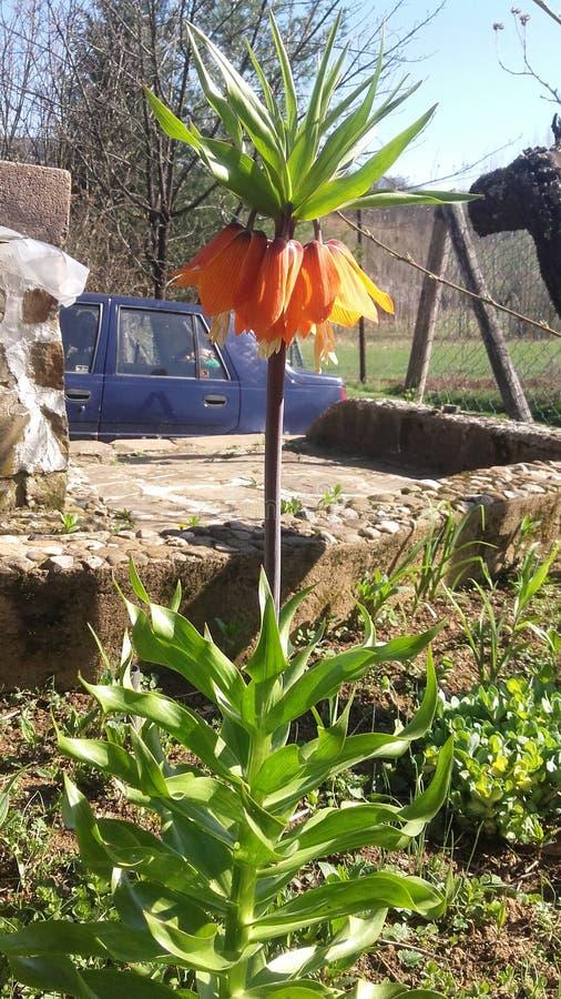 Fleur orange et ciel bleu image libre de droits