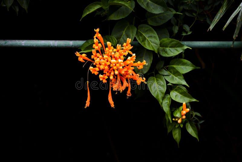 Fleur orange sur le jardin botanique photos stock