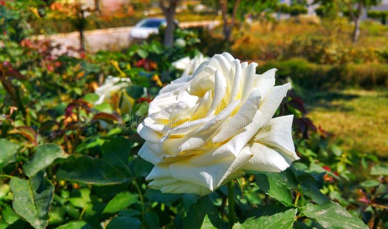 Fleur ostrość obrazy royalty free