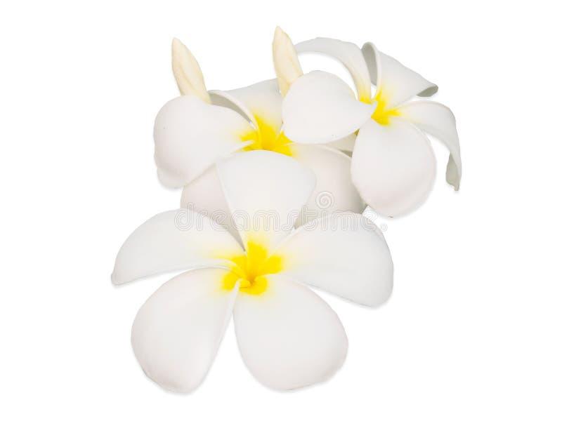 Fleur ou Plumeria de Frangipani d'isolement sur le fond blanc photographie stock libre de droits