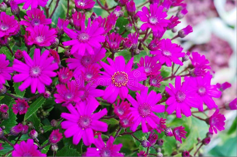 Fleur par la route images libres de droits