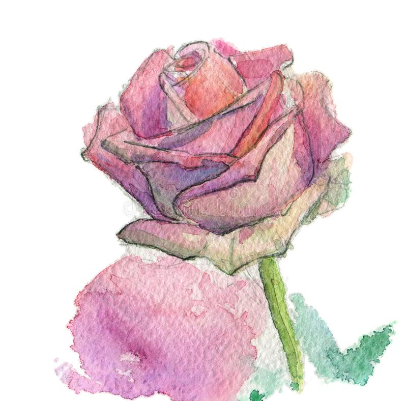 Fleur peinte à la main d'aquarelle, ROS rose, chemin d'isolement de travail illustration libre de droits