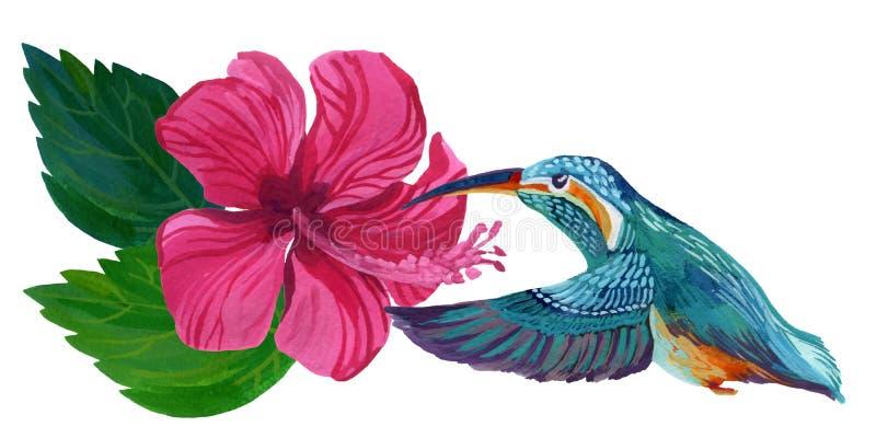 Fleur peinte à la main de ketmie d'isolement sur le fond blanc illustration libre de droits