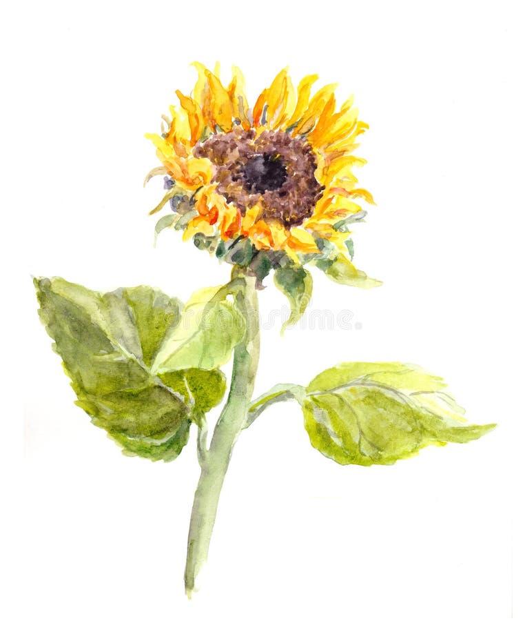 Fleur peinte à la main de tournesol d'aquarelle illustration libre de droits