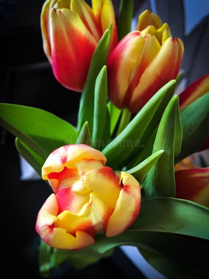 Fleur pelucheuse images stock
