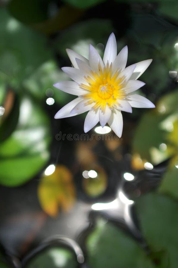 Fleur pendant le moment images stock