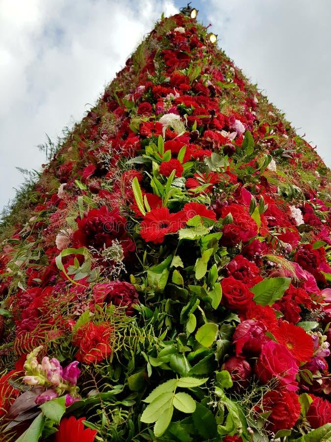 Fleur Piramid image libre de droits