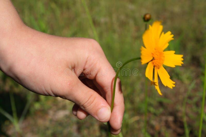 Fleur pour la maman photographie stock libre de droits