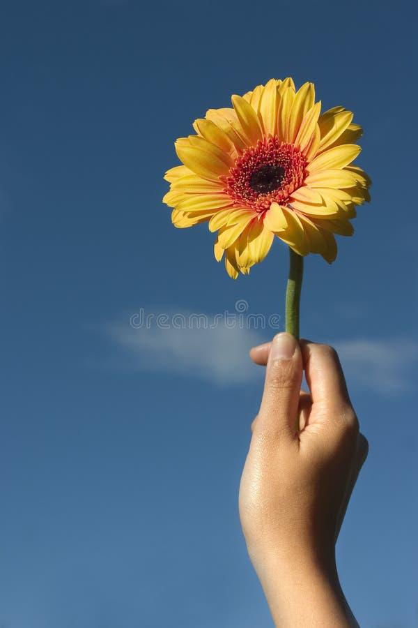 Fleur pour vous photo libre de droits
