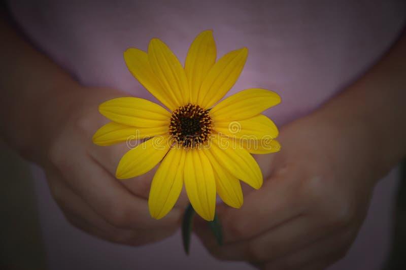 Fleur pour vous images stock