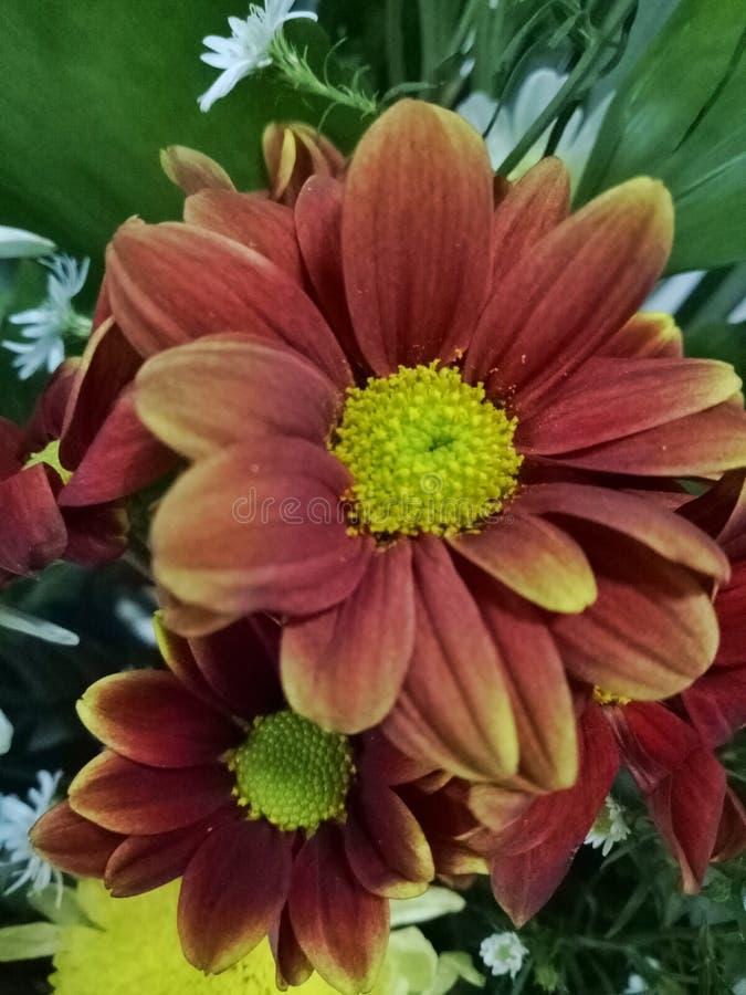 Fleur pour vous image stock