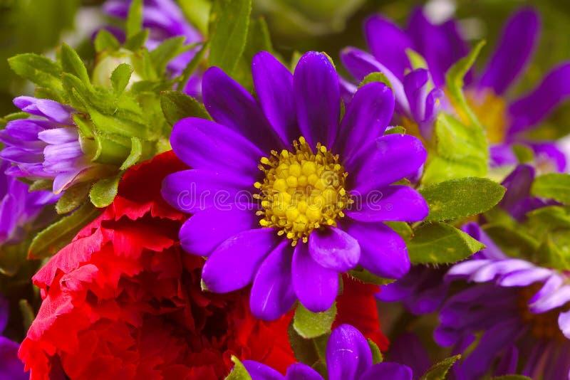 Fleur pourprée images libres de droits