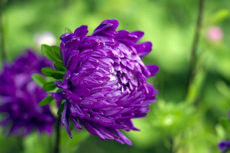 Download Fleur pourprée image stock. Image du fleur, vert, wallpaper - 76084225