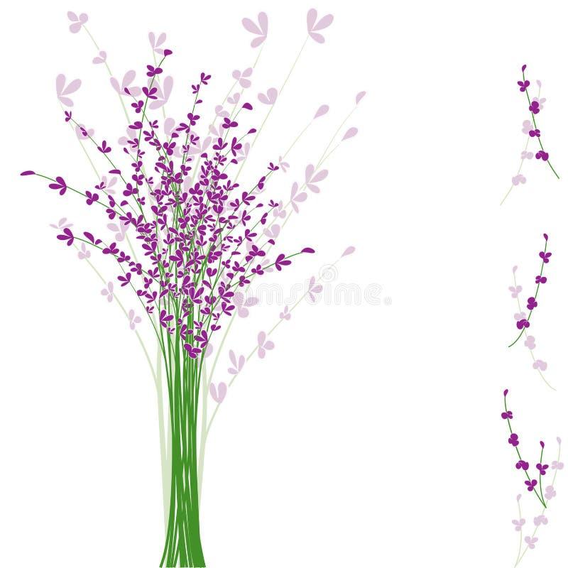 Fleur pourprée de lavande d'été illustration libre de droits