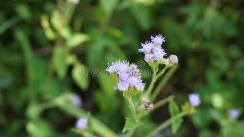 Fleur pourpre avec l'effet de tache floue photo stock
