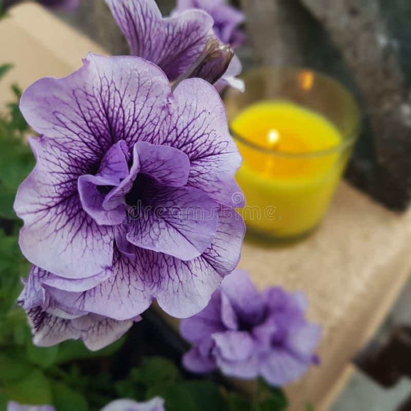 Fleur pourpre avec la bougie dans la tache floue de fond photo stock