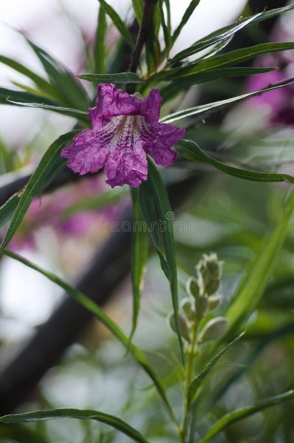 Fleur pourpre avec les feuilles vertes photos stock