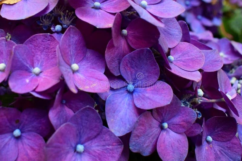 Fleur pourpre d'argent photos stock