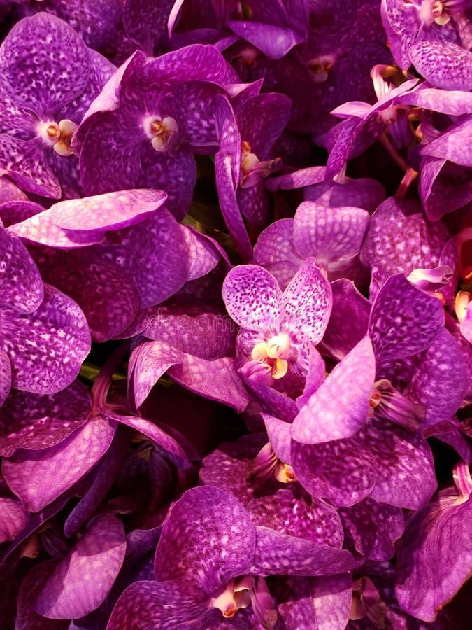 fleur pourpre d'orchidée à un arrangement floral, à un arrière-plan et à une texture image libre de droits