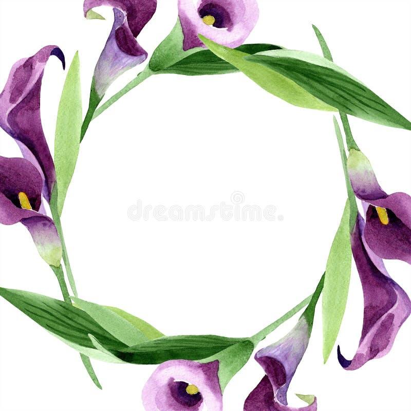 Fleur pourpre de callas d'aquarelle Fleur botanique florale Place d'ornement de frontière de vue illustration de vecteur