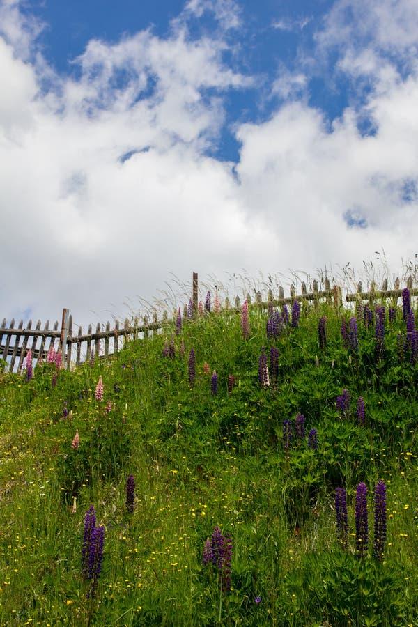 Download Fleur pourpre de Veronica photo stock. Image du couleurs - 45369588