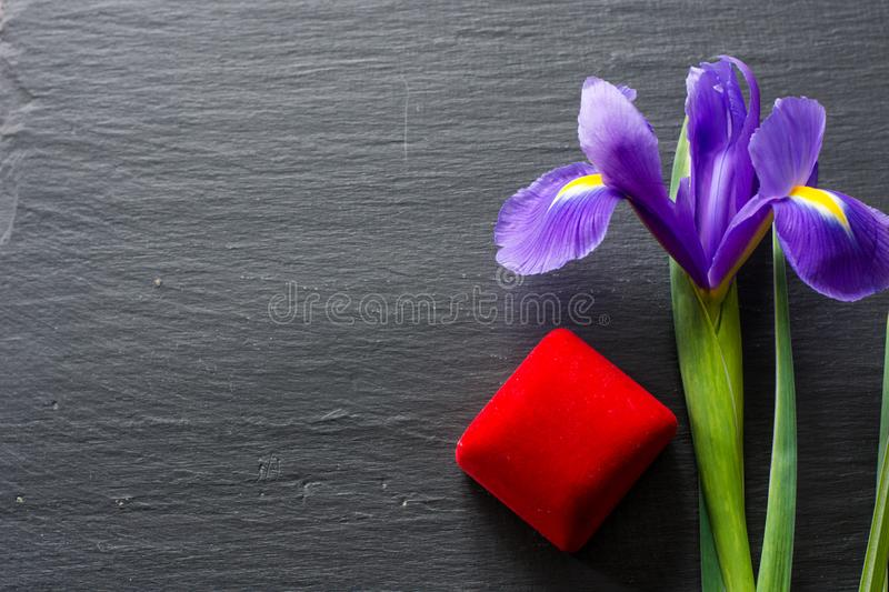 Fleur pourpre exquise d'iris sur le fond en pierre naturel, concept d'engagement photographie stock libre de droits