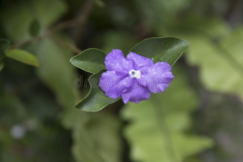 Fleur pourpre unique photographie stock