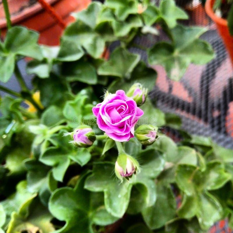 Fleur pourtant à la fleur image stock