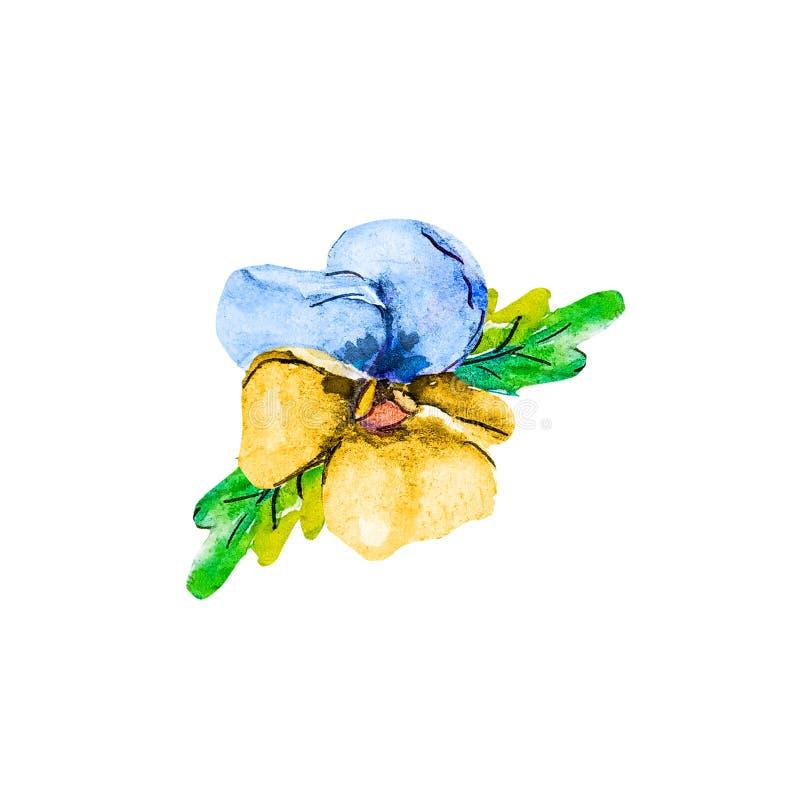 Fleur principale simple d'été de fleur d'aquarelle de l'alto bleu et jaune de pensée d'isolement sur le fond blanc illustration libre de droits