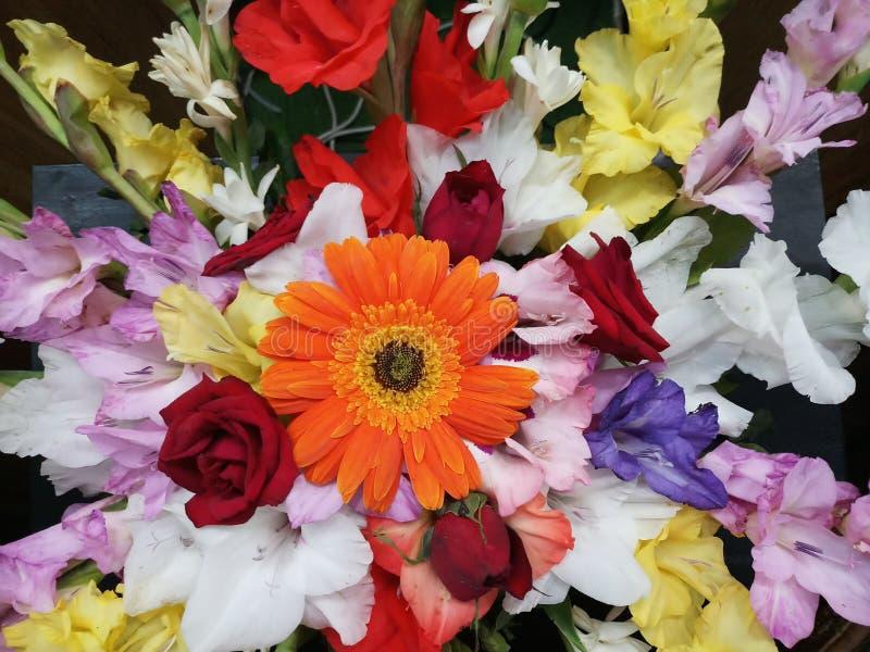 Fleur rêveuse photo stock