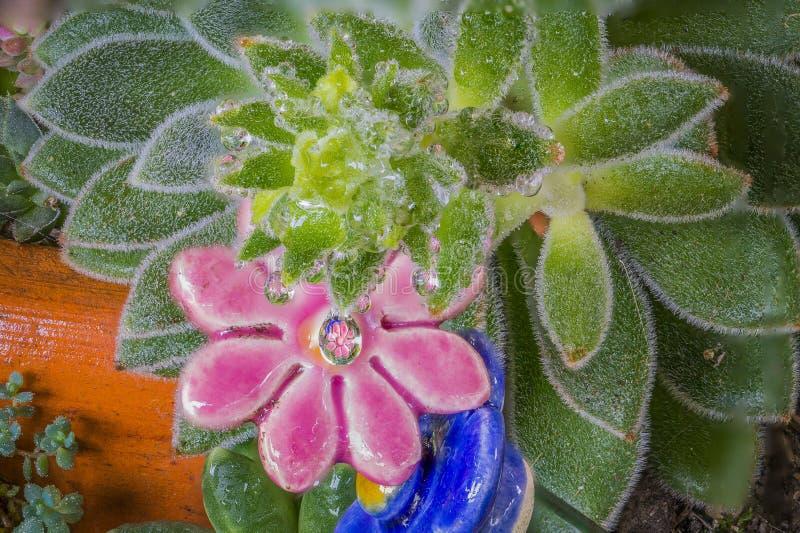 Fleur reflétée par une baisse photographie stock libre de droits
