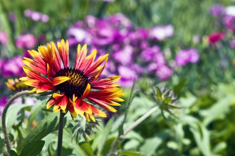 Fleur renversante photo libre de droits