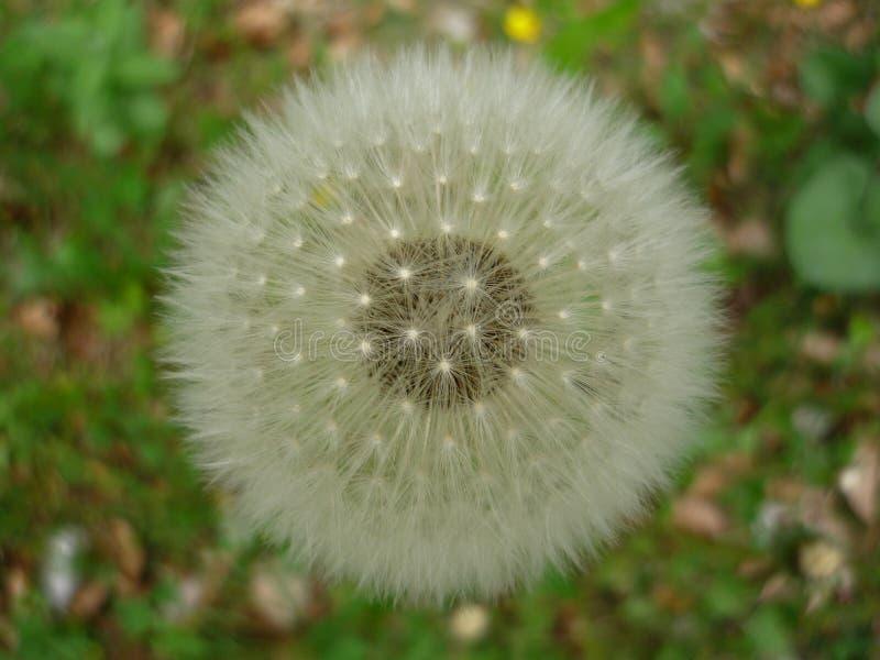 fleur ronde blanche au printemps image stock image du ressort pollen 45579835. Black Bedroom Furniture Sets. Home Design Ideas