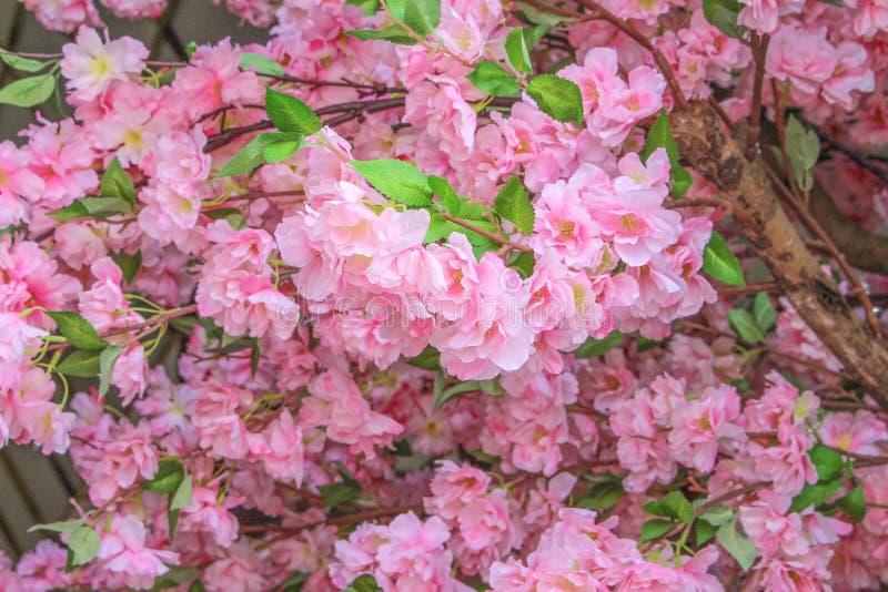 La Fausse Fleur De Sakura, Se Ferment Photo stock - Image ...