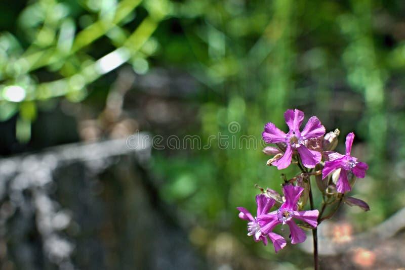 Fleur rose avec le fond vert trouble photographie stock