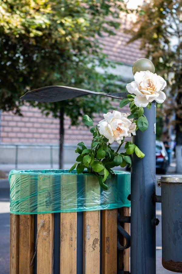 Fleur rose blanche dans une poubelle dans la ville photographie stock