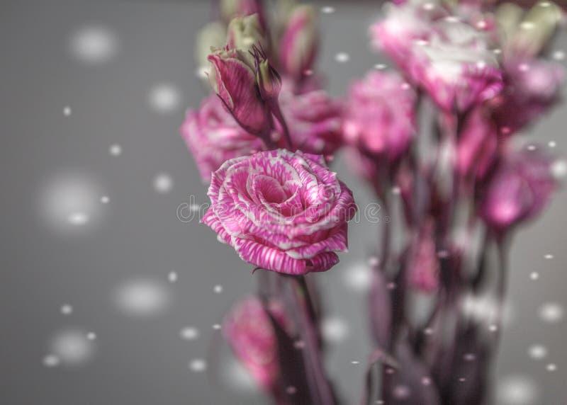 Fleur rose Rose Bouquet Gray Background Snowflake Valentine Theme images libres de droits