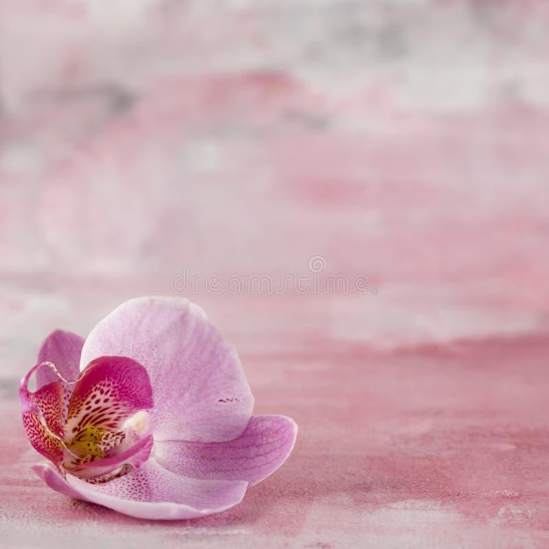 Download Fleur rose d'orchidée image stock. Image du rose, orchidée - 4350179
