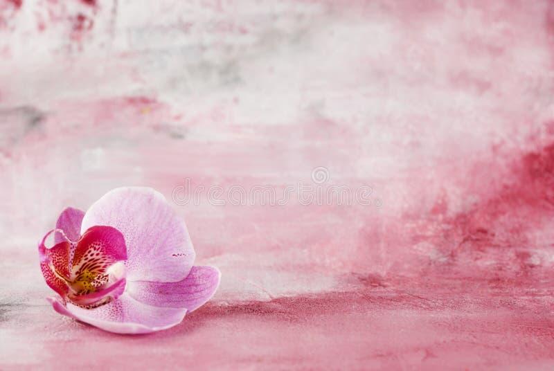 Fleur rose d'orchidée photo stock