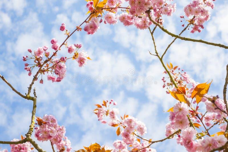 Fleur rose dans une branche photographie stock