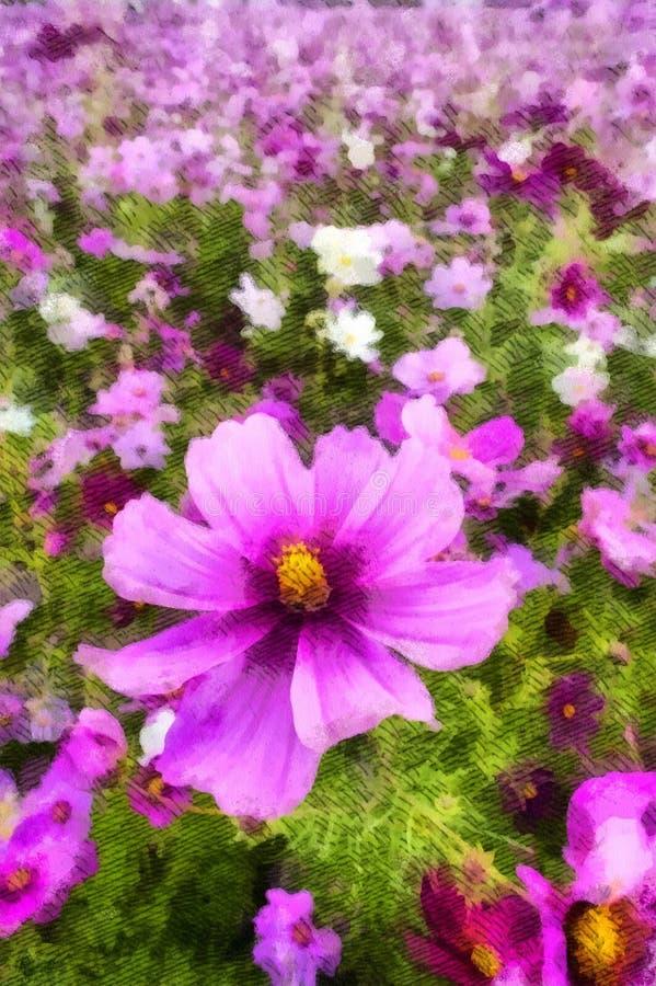 Fleur rose de cosmos à l'arrière-plan de pré avec l'espace de copie Fronti?re et cadre floraux pour la saison de printemps ou d'? image stock