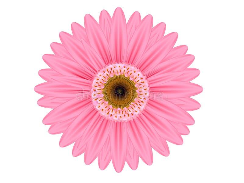 Fleur rose de Gerbera image libre de droits