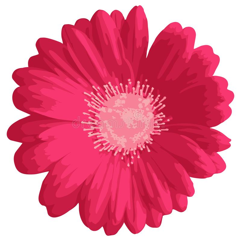 Fleur rose de gerbera ou de marguerite illustration libre de droits