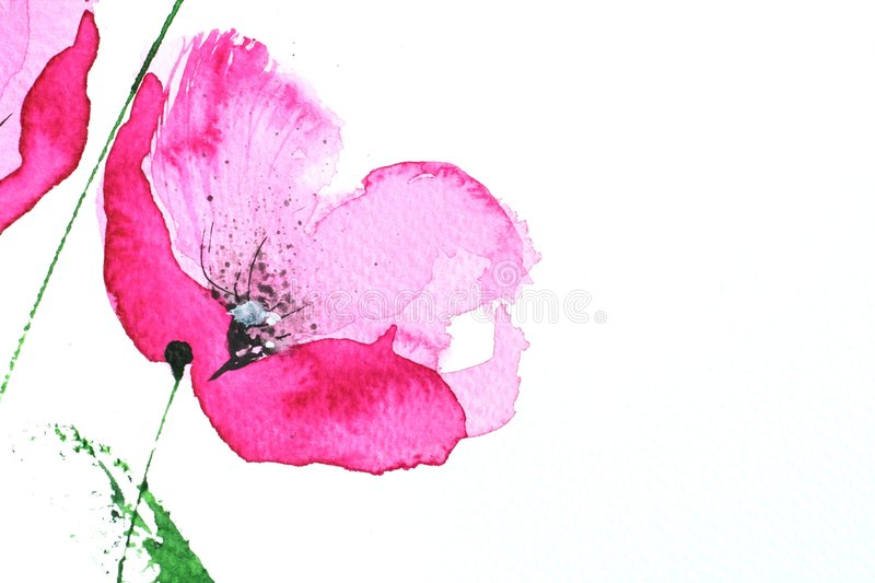Fleur rose de pavot de Watercolour illustration de vecteur