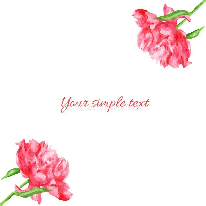 Fleur rose de pivoine, isolat d'illustration d'aquarelle sur le blanc, frontière de vecteur illustration stock
