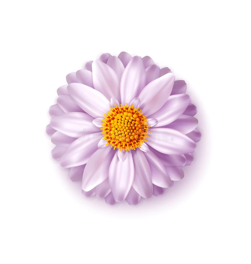 Fleur rose de vecteur d'isolement sur le fond blanc Élément pour un f illustration stock