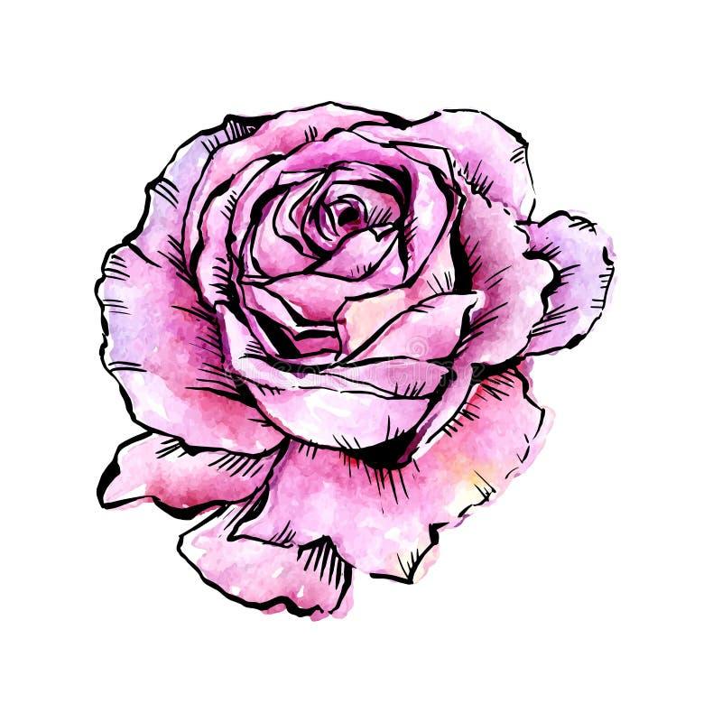 Fleur rose de vecteur de Wildflower dans un style d'aquarelle d'isolement illustration stock