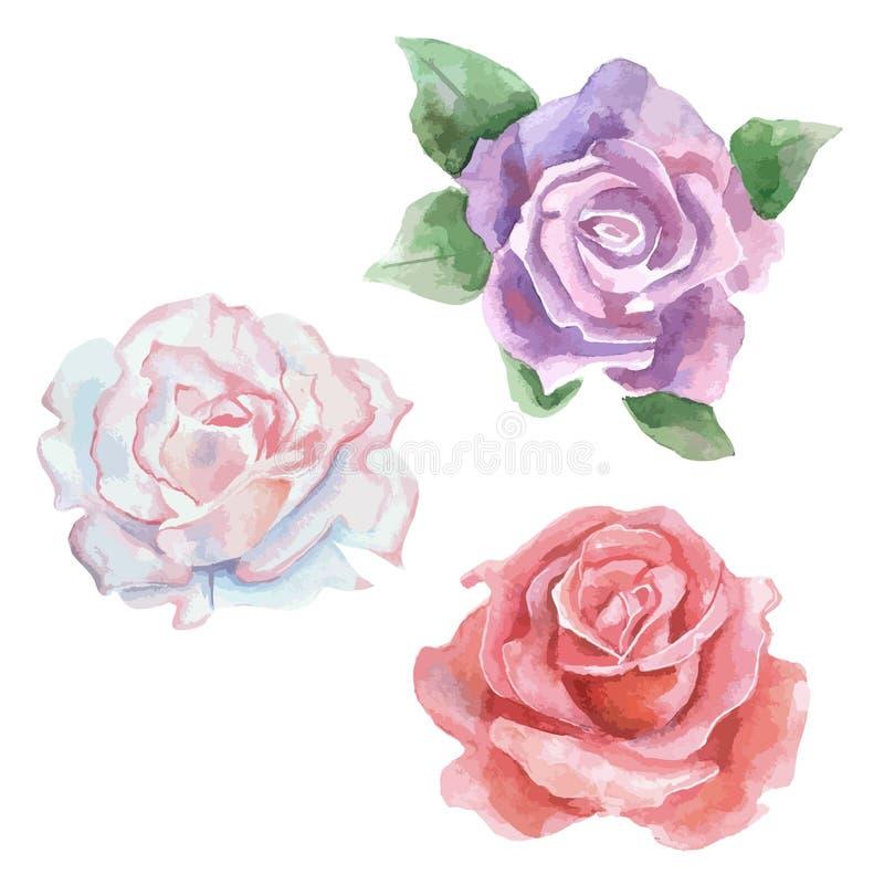 Fleur rose de vecteur de Wildflower dans un style d'aquarelle illustration libre de droits