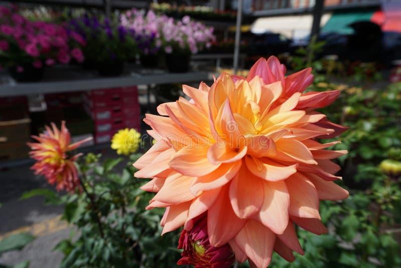 Fleur rose dessus sur le marché images stock